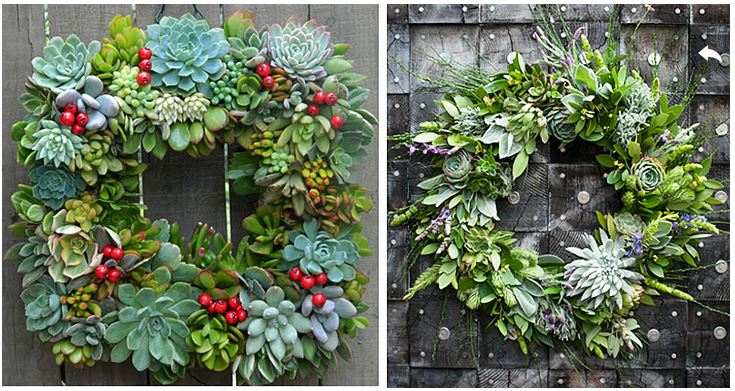 Succulent wreath for the holidays